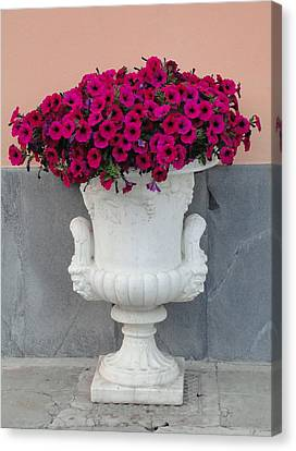 Canvas Print featuring the photograph The Planter by Natalie Ortiz