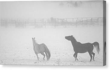 Canvas Print featuring the photograph The Play Of Horses by Michael Dohnalek