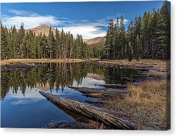 Dana Canvas Print - The Pond At Dana Meadow by Peter Tellone