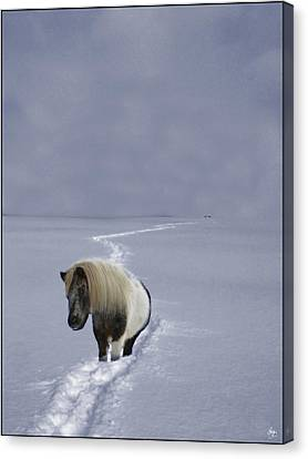 Canvas Print featuring the photograph The Ponys Trail by Wayne King