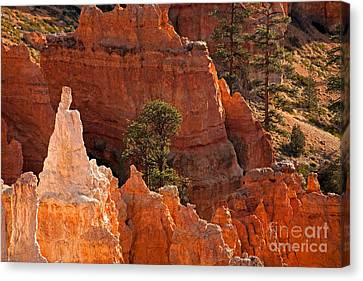 The Popesunrise Point Bryce Canyon National Park Canvas Print