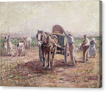 The Potato Pickers Canvas Print by Harry Fidler