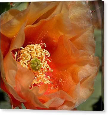 The Prickly Pear World Canvas Print by Joe Kozlowski