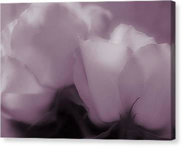Angelical Canvas Print - The Promise Of Love by The Art Of Marilyn Ridoutt-Greene