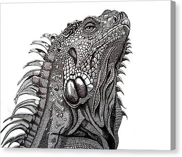 The Proud Iguana Canvas Print by Tracey Gurr BA Hons