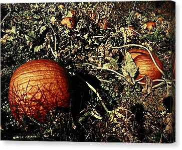 The Pumpkin Patch Canvas Print by Chris Berry
