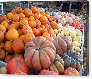 The Pumpkin Stand Canvas Print by Richard Reeve