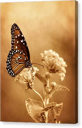 The Queen Butterfly  Canvas Print
