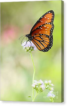 The Queen In Spring Canvas Print