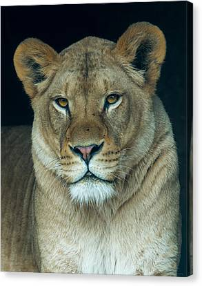 The Queen Canvas Print by Phil Abrams