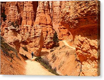 The Queens Garden Trail Bryce Canyon Canvas Print by Butch Lombardi