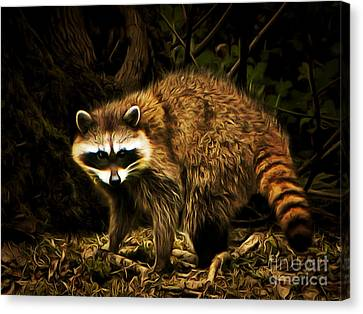 The Raccoon 20150211brun Canvas Print by Wingsdomain Art and Photography