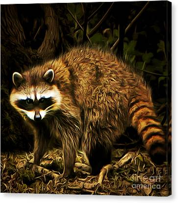 The Raccoon 20150215brun Square Canvas Print by Wingsdomain Art and Photography