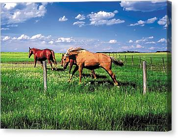 The Race Canvas Print by Terry Reynoldson