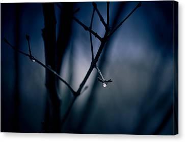 The Rain Song Canvas Print by Shane Holsclaw