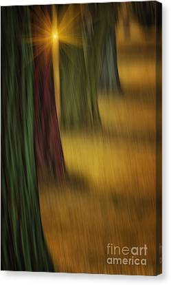 The Rainbow Forest Canvas Print by Tom York Images