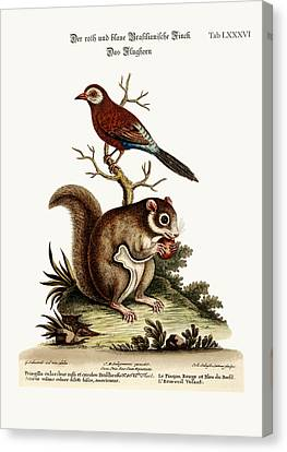 The Red And Blue Brasilian Finch. The Flying Squirrel Canvas Print