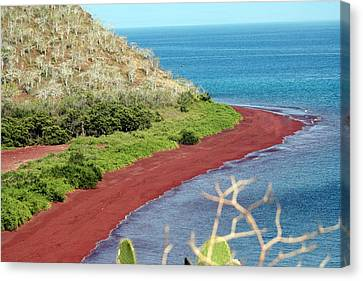 The Red Beach Of Rabida Canvas Print
