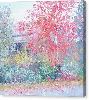 The Red Japanese Maple Tree Canvas Print
