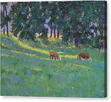 The Red Steers Canvas Print by David Zimmerman