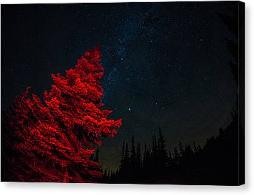 The Red Tree On A Starry Night Canvas Print by Brian Xavier