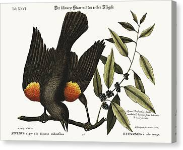 The Red-winged Starling Canvas Print by Splendid Art Prints
