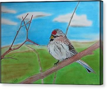 The Redpoll Canvas Print by Tony Clark