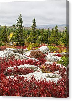 The Reds And Greens Of Dolly Sods Wilderness In West Virginia Canvas Print by Bill Swindaman