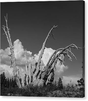 Canvas Print featuring the photograph The Remnant by Terry Garvin
