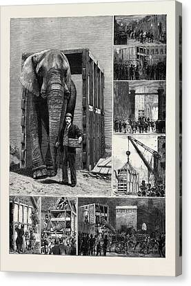The Removal Of Jumbo Canvas Print by English School