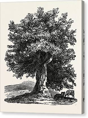 The Renewed Tree Canvas Print by English School
