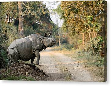 The Rhino At Kaziranga Canvas Print by Fotosas Photography