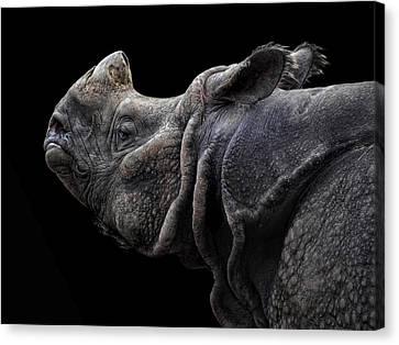 The Rhino Canvas Print by Joachim G Pinkawa