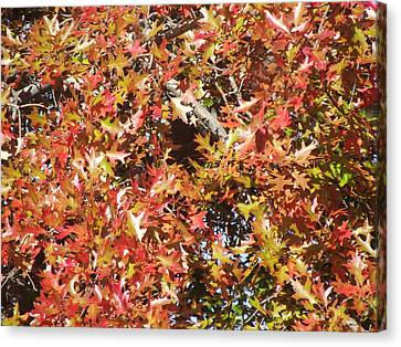 The Rich Reds And Yellows Of Fall Canvas Print by James Rishel