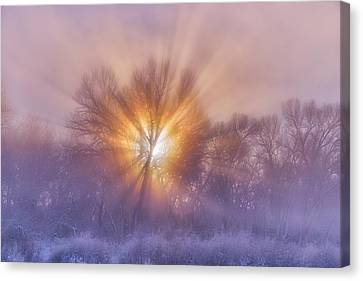 The Rising Canvas Print by Darren  White
