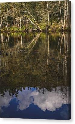 The River Vii Canvas Print by Marco Oliveira
