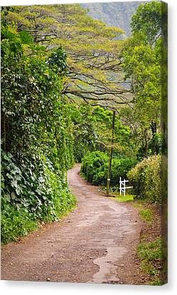 The Road Less Traveled Canvas Print by Denise Bird