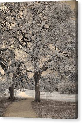 The Road Less Traveled Canvas Print by Jane Linders