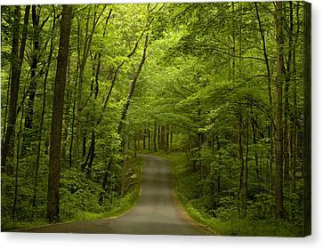 The Road Less Travelled Canvas Print by Andrew Soundarajan