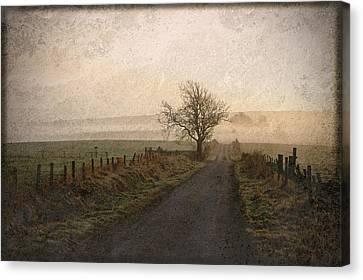The Road Not Taken Canvas Print by Liz  Alderdice