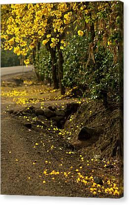 The Road Not Taken Canvas Print by Ramon Fernandez