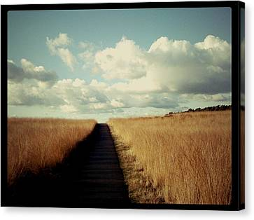 The Road Rarely Taken Canvas Print by Beril Sirmacek