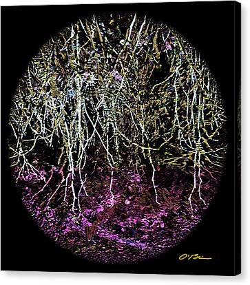 The Roots Of It All Canvas Print by Claudia O'Brien