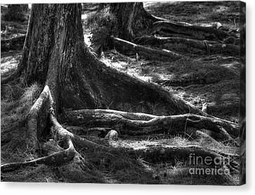 The Roots Canvas Print by Sophie Vigneault