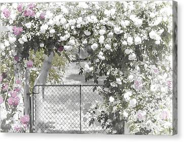The Rose Arbor Canvas Print by Elaine Teague