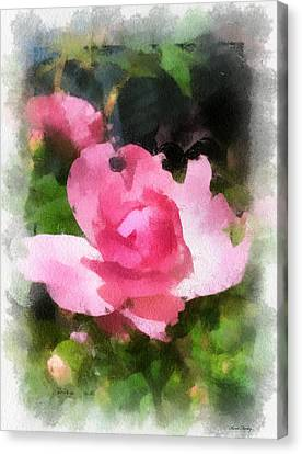 The Rose Canvas Print by Kerri Farley