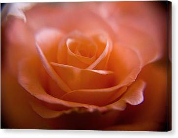 The Rose Canvas Print by Kim Lagerhem