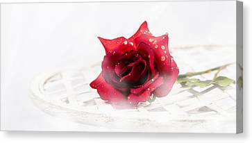The Rose Canvas Print by Ronel Broderick