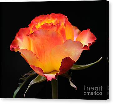 The Rose Canvas Print by Vivian Christopher