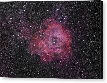 The Rosette Nebula Canvas Print by Brian Peterson
